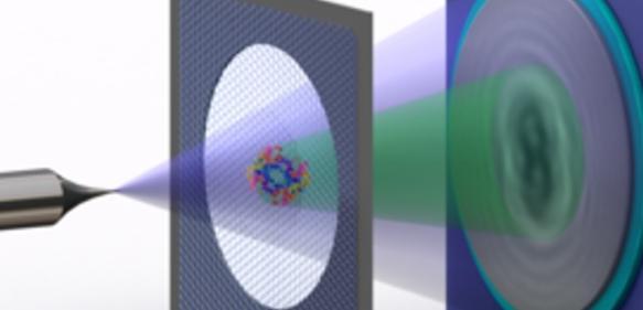 Schema der Elektronen-Holografie einzelner Proteine: Eine Metallspitze, deren Ende nur aus wenigen Atomen besteht, sendet einen Strahl vergleichsweise langsamer, also energiearmer Elektronen aus. Einen Teil des Strahls wird an dem Protein auf einem Graphen-Träger gestreut. Der gestreute Teil des Strahls erzeugt mit dem nicht-gestreuten Teil dann ein Interferenzmuster – das Hologramm, das aufgezeichnet wird. (© Tatiana Latychevskaia  / Universität Zürich)