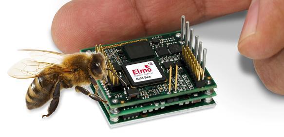 Elmo-Gold-Bee