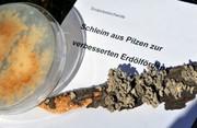 Exopolysaccharid: Pilzschleim für die Erdölförderung