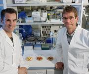 Prof. Dr. Stefan Lorkowski (links) und Prof. Dr. Michael Glei von der Universität Jena untersuchen das gesundheitliche Potenzial von gerösteter Gerste und Hafer. (Foto: Jan-Peter Kasper / FSU)