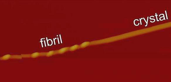 Proteinfaltung: Amyloid-Fibrillen: Aus Fasern werden Kristalle