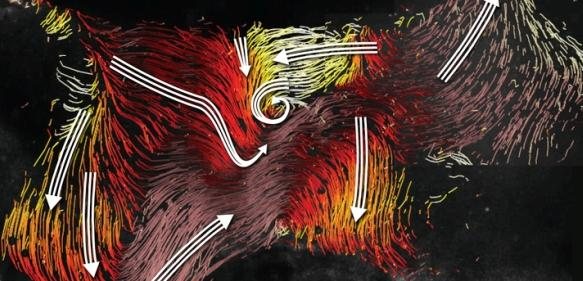 Flimmerhärchen: Strömungskarte im dritten Ventrikel des Maushirns mit den Strömen entlang der Ventrikelwand (farbige Linien) und den Hauptstromrichtungen (weiße Pfeile) in einzelnen Bereichen. Strömungskarte im dritten Ventrikel des Maushirns mit den Strömen entlang der Ventrikelwand (farbige Linien) und den Hauptstromrichtungen (weiße Pfeile) in einzelnen Bereichen.