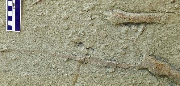 Handabdrücke von azhdharchiden Flugsauriern in einem Sandstein der spätesten Kreidezeit. Fundort: Rancho San Francisco bei Paredon, Nordost-Mexiko. (Bild: Wolfgang Stinnesbeck)