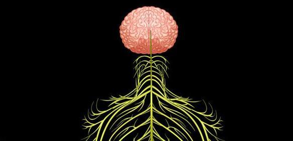 Zeichnung Gehirn