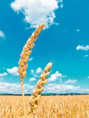 Gluten-Nachweis: Glutenfrei - Wie erbringt man den Nachweis?
