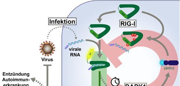 Immunreaktion