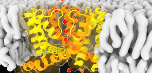 Visualisierung eines Schnappschusses aus der Computersimulation des Ionenkanals NaK.