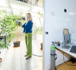 Mitarbeiter der Professur für Ökosystemphysiologie untersuchen in den Klimakammern künftig, wie sich veränderte Klimabedingungen auf die Vegetation auswirken. (Foto: Klaus Polkowski)