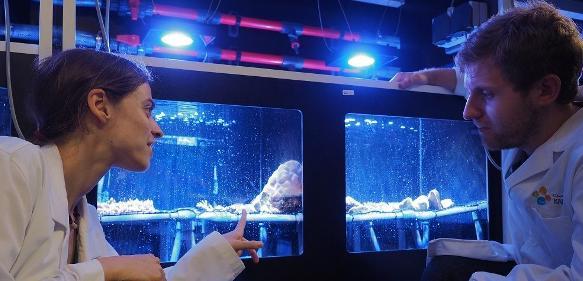 Claudia Pogoreutz und Nils Rädecker bei der experimentellen Arbeit. (© KAUST)