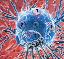 Krebszellen passen sich jedoch an und werden immun, daher muss auch die optimale Therapie im zeitlichen Verlauf immer wieder angepasst werden. (Bild: Research Institute of Molecular Pathology (IMP))
