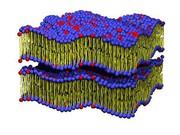 Dynamik  von Lipidmolekülen: Röntgen-Stroboskop liefert neue Einblicke