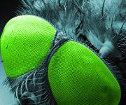 Komplexes 3D-gedrucktes Objektiv auf einer optischen Faser neben den Facettenaugen einer Fliege