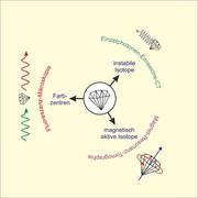 Nanodiamanten als Transportvehikel: Markierungen sollen im Körper detektierbar  sein