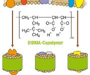 Schematische Darstellung der Extraktion von Membranproteinen aus einer biologischen Membran (oben) unter Bildung von Nanodiscs (unten), in denen ein Polymer (grün) eine Lipiddoppelschicht (braun) mit eingebetteten Proteinen (andere Farben) umschließt.
