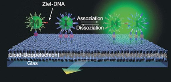 Ultrasensitive DNA-Quantifizierung: Per Lichtstreuung ganz ohne PCR