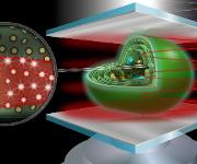 """Weißlicht (oben, bestehend aus vielen Wellenlängen) trifft auf einen """"Mikroresonator"""" aus zwei Silberspiegeln mit wenigen Mikrometern Abstand, die ein starkes optisches Feld aufbauen. Wird ein Cyanobakterium (Mitte) diesem ausgesetzt, könnten die lichtsammelnden Photosynthese-Komplexe des Bakteriums (Vergrößerung, links) """"gleichgeschaltet"""" bzw. """"verschränkt"""" werden. Eventuelle Änderungen in der photosynthetischen Effizienz, werden über ein Mikroskopobjektiv (unten, nicht maßstabsgetreu) erfasst und untersucht. (Abbildung: Meixner / Universität Tübingen)"""