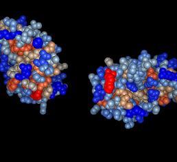 Protein EPL1