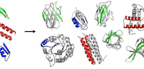 Die ersten gefalteten Proteine sind vermutlich aus einer Reihe ursprünglicher Peptide entstanden. (Copyright: Vikram Alva / Max-Planck-Institut für Entwicklungsbiologie)
