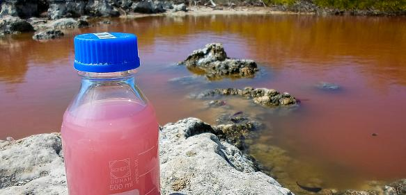 Geobiologie: Archaische Bakterienriffe in pinkfarbener Salzlake