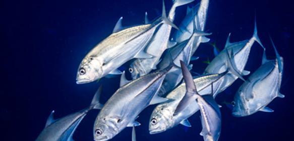 Evolutionsforschung: Fische sehen blau