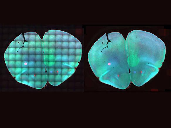 Bioimaging: Klare Sicht auf Stammzellentwicklung