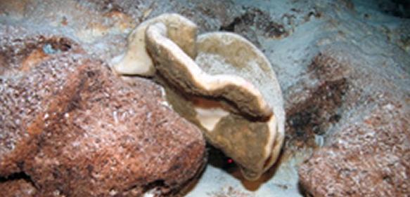 Steinschwämme