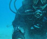 Taucher sammelten Proben der Mondmuscheln und Fadenwürmer beispielsweise an der Küste der Insel Elba in Italien, um anschließend ihre symbiotischen Mitbewohner genauer unter die Lupe zu nehmen. (Copyright: Ulisse Cardini)