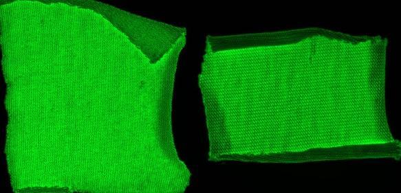 Machbarkeitsstudie – Textilien auf Cellulosebasis wurden mit einem grün-fluoreszierenden Markerprotein + Cellulose-Anker ausgerüstet. Baumwolle (links), Viskose (mitte), Negativkontrolle = grün-fluoreszierendes Protein ohne Cellulose-Anker (rechts). (© Foto Hohenstein Institute)