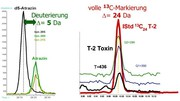 """""""Tuning"""" und Veredelung von chromatographischen Analysenverfahren durch isotopenmarkierte interne Standards: Von klassischen Methoden zur Stabilisotopenverdünnungsanalytik"""