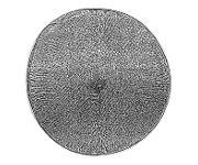 Röntgenhologramm (Ausschnitt) einer Schale der Kieselalge Actinoptychus senarius mit einem Durchmesser von nur 0,1 Millimetern.