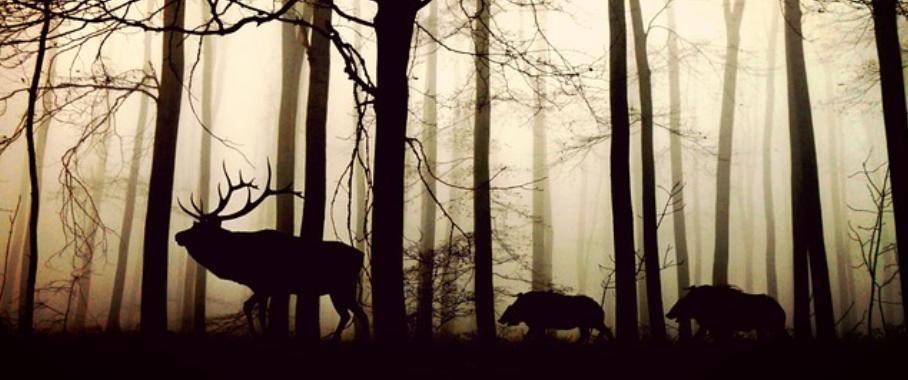 Hirsch und Wildschweine
