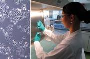 Chemotherapie: Nanozwerge als Tumorkiller