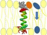 News: Aufbau der Doppelschicht von Biomembranen: Platzanweiser für Membran-Bausteine