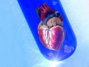 Herzgewebe aus dem Labor: Das Herz in der Petrischale