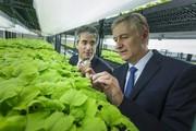Molecular Farming: Automatisierte Tabakfarm produziert Impfstoffe