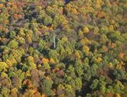 News: Wie Wälder mit mehr Kohlendioxid umgehen