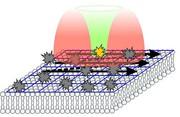 : STED-RICS-Mikroskopie zeigt Molekülbewegungen in lebenden Zellen