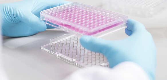 Magnetische 3D-Zellkultur mittels Bioprinting.