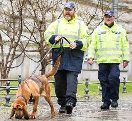 Forensik: Mantrailing – Riechen Hunde DNA?