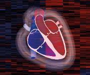 Herzschemata mit Heatmap