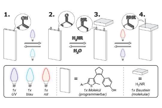 Mit Hilfe eines lichtgesteuerten Moleküls und der geeigneten Lichtsequenz lässt sich die Verknüpfung mit einem molekularen Baustein entweder herstellen.