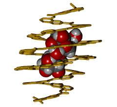 Ein Foldamer-Rezeptor, der gezielt an ein Disaccharid bindet und es vollständig umhüllt.