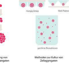 Krebszell-Kultivierung: Zellen in der dritten Dimension