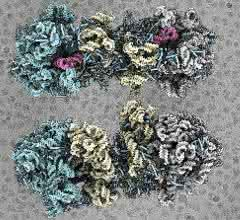 Darstellung zweier 100S-Ribosom-Komplexe.