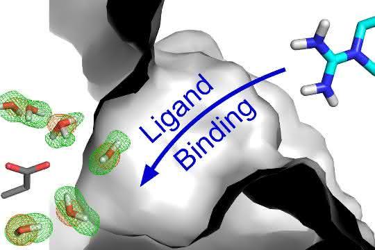 Wassermoleküle, deren Aufenthaltsbereich durch die grün-roten Gitterlinien umfasst wird, tragen dazu bei, die Wechselwirkung zwischen einem Protein und dessen Bindungspartner zu ermöglichen.