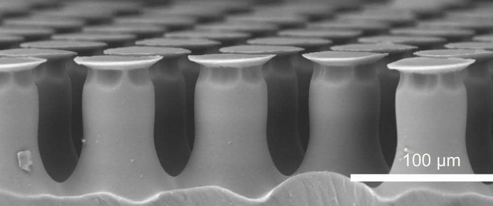 Rasterelektronenmikroskop-Aufnahme zeigt Oberfläche der Haftelemente