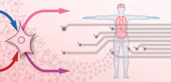 Abstrakte Darstellung Organ-on-Chip