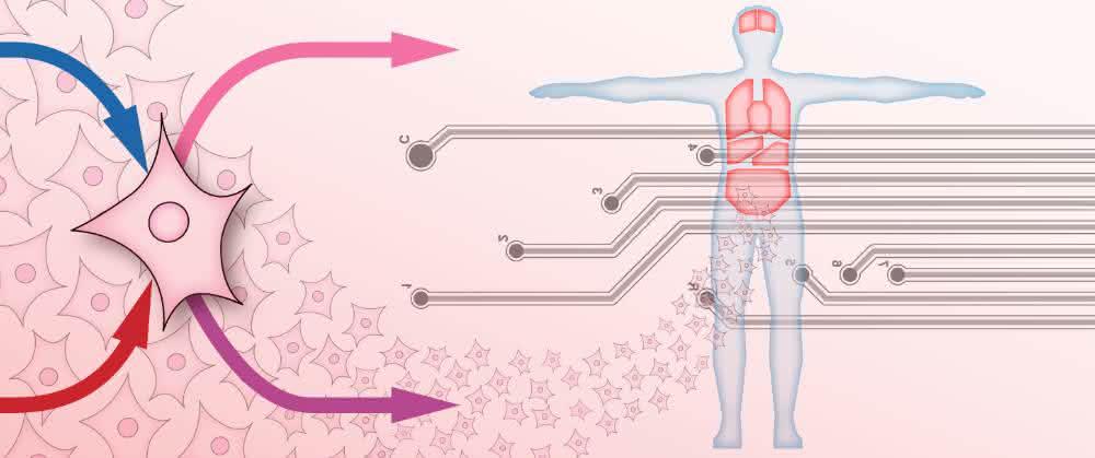 Abstrakte Darstellung Organ-on-Chip