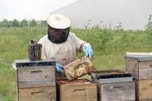 Logistik-Dienstleister: Bienenvölker bei Logistikdienstleister angesiedelt