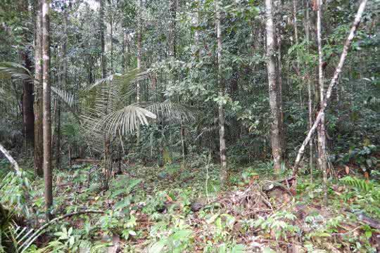 Mikroorganismen beeinflussen die Luft: Flüchtige Stoffe aus dem Urwaldboden